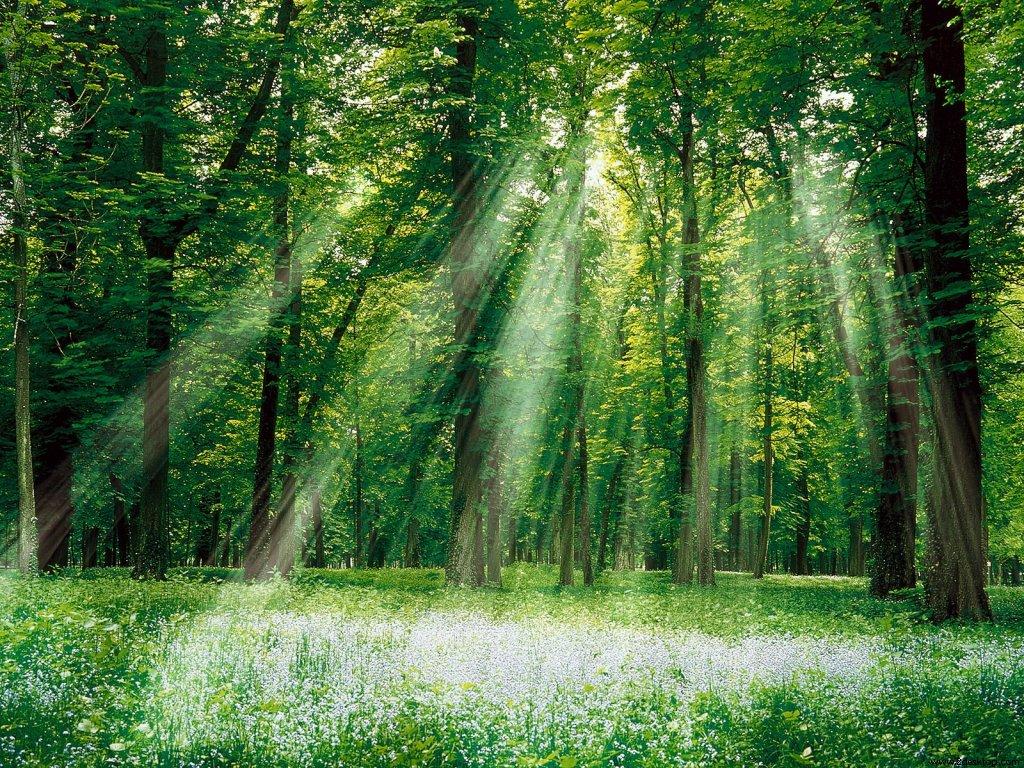 Köylülerin Kutsal Saydığı Ormana 600 Yıldır Balta Girmiyor