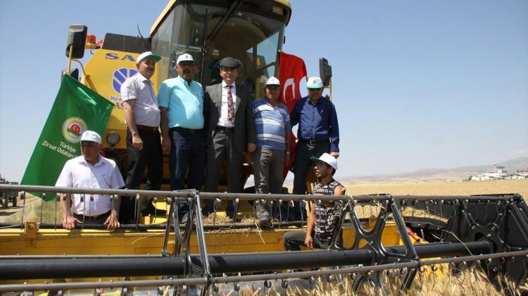 Çubuk'ta Buğday Hasadı Başladı