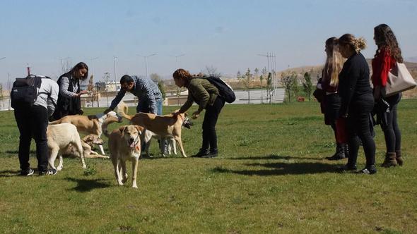 Üniversite öğrencileri hayvanlar için kulüp kurdu
