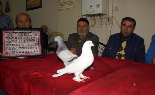 Terör Mağdurları Yararına Güvercin Mezatı