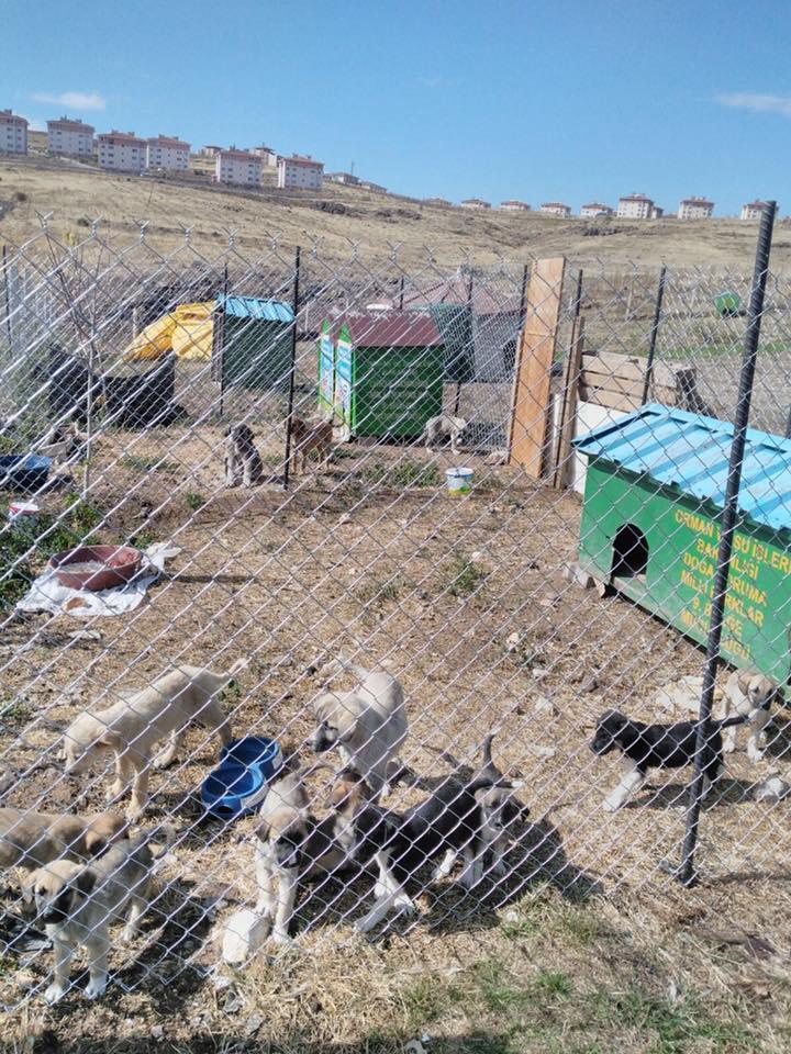 Sahipli Kedi Ve Köpekler İçin Kuduz Aşısı Kampanyası