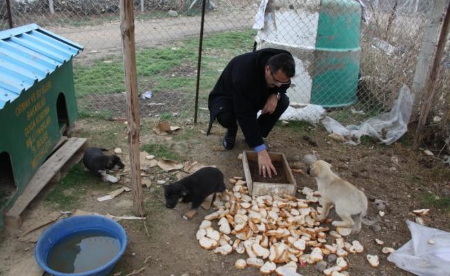 Çubuk'ta Bir Yılda 87 Sokak Hayvanı Sahiplendirildi