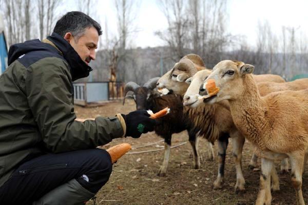 Bakan Pakdemirli, yaban hayvanları için doğaya yem bıraktı