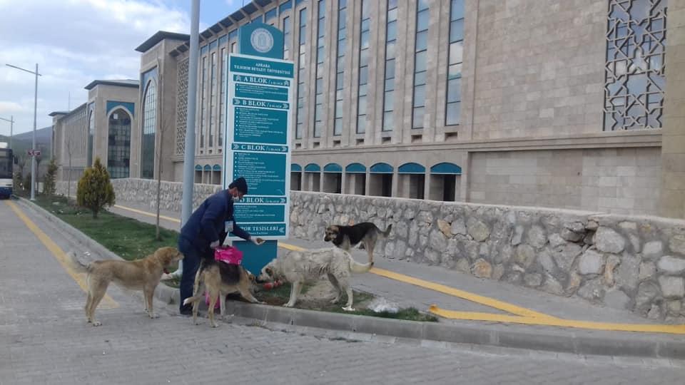 Çubuk'ta Sokak Hayvanları Unutulmadı