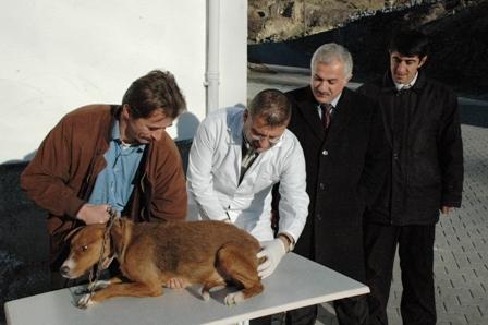 Başıboş Köpekler Aşılandı