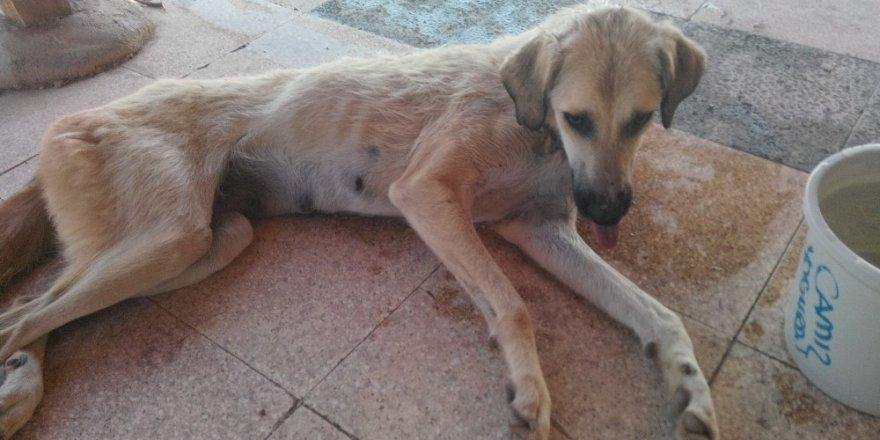 Çubuk'ta Kuyuya Düşen Köpekleri Belediye Ekipleri Kurtardı