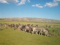 Hayvancılık  OSBde kamulaştırma