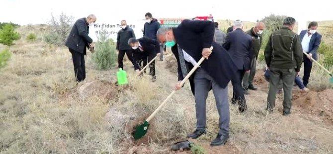 """Çubuk'ta """"Geleceğe Nefes Ol"""" kampanyasıyla binlerce fidan toprakla buluştu"""