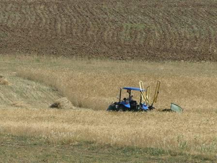 Son Yağışlar Çiftçiye Umut Verdi