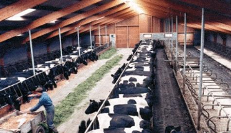 Çubukta 51 Bin 910 Canlı hayvan Var