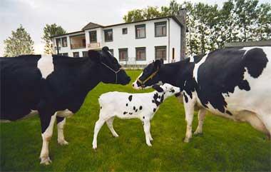 Hayvancılık destekleme miktarları belirlendi