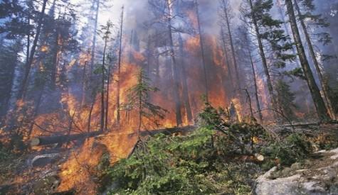Hacılar Köyünde Çıkan  Yangın Söndürüldü