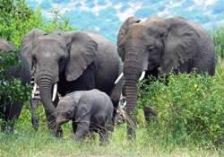 Filler bastı: 4 bin kişi ülkeyi terketti