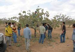Çiftçilere Ağaç Budama Eğitimi