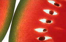 En hızlı zayıflatan meyve: Karpuz
