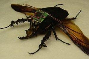İstihbaratçılıkta Çipli böcek devrimi