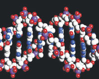 Nefes almayı sağlayan gen keşfedildi