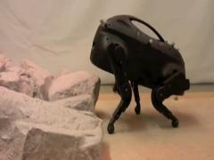 Küçük robot köpek