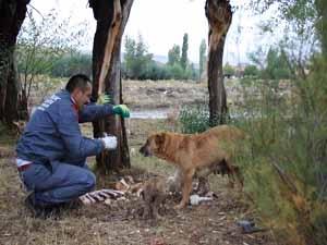Yaban Hayvanlarına Yem Bırakıldı