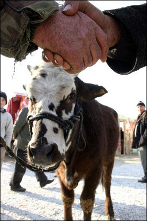 Vatandaş Kurbanlık Tercihini Çiftliklerden Yöne Yaptı