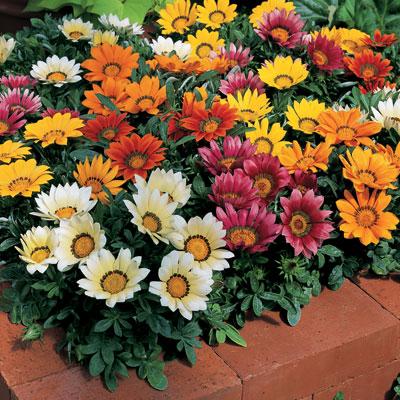 Belediyeden Mevsimlik Çiçek Ekimi