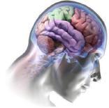 Beyindeki Anıların Resmi Çekildi!