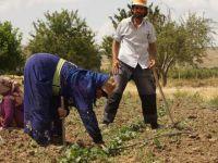 Ankara'da Suriyeli Mevsimlik İşçi Dönemi