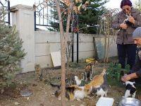 Öğretmen Çiftin Bahçesi Sokak Hayvanlarına Yuva Oldu