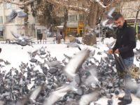 Hamallık yaparak güvercinleri besliyor