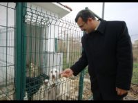 Çubuk'ta sokak hayvanlarına sağlık hizmeti