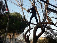 Budanan Ağacın Dalları Elektrik Tellerini Kopardı