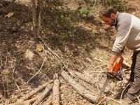 Mevsimlik orman işçilerinin zorlu mesaisi