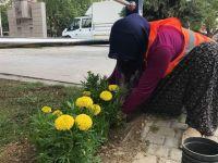 Çubuk'ta çiçeklendirme çalışmaları