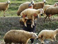 Çobanlık Ekmek Kapıları Oldu