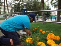 Çubuk'ta Parklar Ve Caddeler Çiçeklendirildi