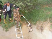 Boş Havuza Düşen Porsuk İtfaiye Ekiplerince Kurtarıldı