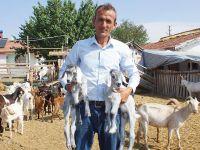 Stresten Kurtulmak İçin Başladı, Keçi Çiftliği Kurdu