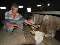 Aydos Dağı'nda Beslenen Kurbanlıklar Günler Öncesinden Satıldı