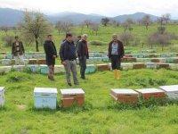 Tarım ilacı 3 bin kovan arıyı telef etti!