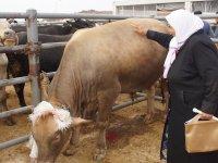 """Çubuk'taki hayvan pazarında """"kurban"""" hareketliliği başladı"""
