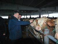 Başkan Demirbaş'dan hayvan pazarına ziyaret