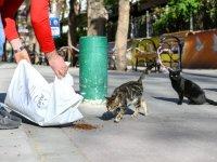 Başkent'te sokak hayvanları unutulmuyor