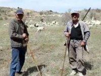 Dağ bayır keçi güdüyorlar