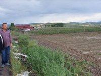 Çubuk'taki dolu yağışı ekili arazilere zarar verdi