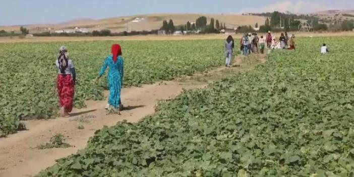 'İç Anadolu'nun Çukurovası' Mevsimlik İşçilerin Ekmek Kapısı