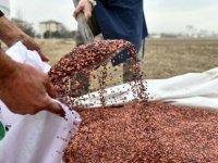 Büyükşehir çiftçilerin yanında: 25 ilçede tohum desteği