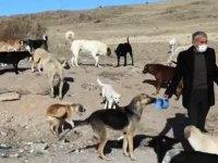 Hayvansever aile, salgınla zorlaşan şartlara rağmen sokak hayvanlarını unutmuyor