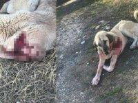 Köpeği ile bakkala giderken sokak köpeğini bıçakladı