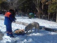 Çubuk'ta hayvanlar için doğaya yiyecek bırakıldı