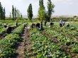 Bakanlık'tan çiftçiye 16 üründe destek